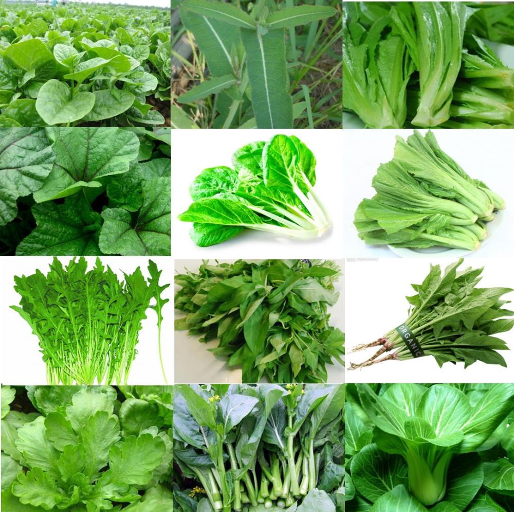 New Suppliers: Fresh Chinese Green and More…